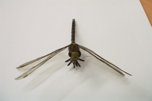 Dragonfly HAR Attached