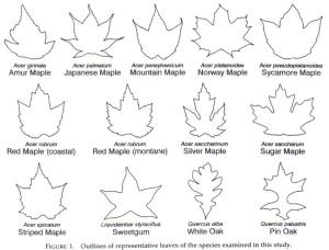 Figure 1 the ten species of leaf shape