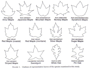 Figure 1 the ten species of leaf shape
