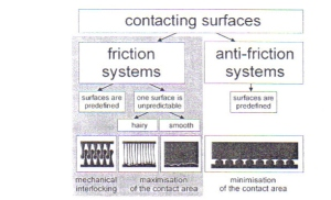 Figure 13 - Functinonal sigificance and Working Principles of Contacting Surfaces form Gorb [4]
