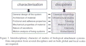 Figure 14 - Interdisciplinary character of the studies of biological attachment mechanisms from Gorb [4]