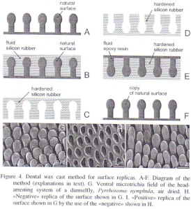 Figure 15 - Dental wax method for surface replicas from Gorb [4]