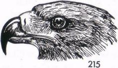 Figure 17 i  eagle