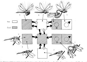 Figure 26 - Dragonfly head arresting mechanism