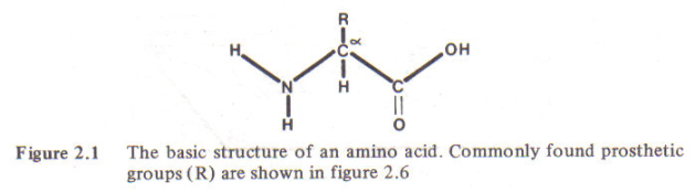 Figure 3 - Amino acid structure