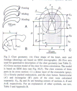 Figure 34 - claw geometry