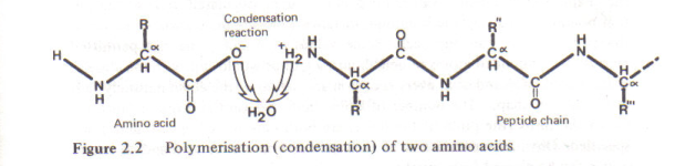 Figure 4 - The reaction equation between two mers