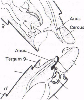 Figure 6 Stage 1